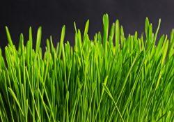 Græsfrø gør grønnere